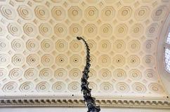 Allosauro - museo americano di storia naturale Fotografie Stock Libere da Diritti