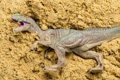 Allosauro sulla sabbia Fotografie Stock Libere da Diritti