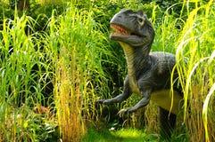 Allosaurus Immagini Stock Libere da Diritti