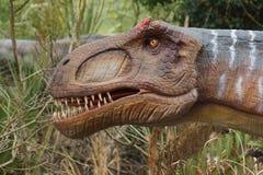 Allosaurus - Allosaurus fragilis Royalty Free Stock Image