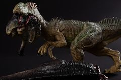 Allosaurus biting a dinosaur body on dark background stock photography