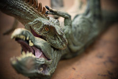 Allosaurus biting tyrannosaurus royalty free stock photography