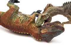 Allosaurus biting tyrannosaurus toys on white Royalty Free Stock Image