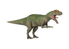 Allosaurus de dinosaure du rendu 3D sur le blanc Images stock