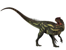 Allosaurus Isolated. Allosaurus was a large theropod predatory dinosaur which lived in the late Jurassic period Stock Images