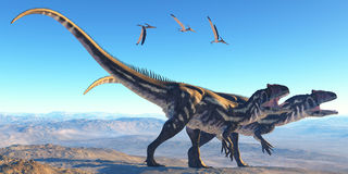 Allosaurus on Mountain. Two Allosaurus dinosaurs look for prey on a high mountain as Pterosaurs watch them Royalty Free Stock Image