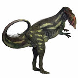 Allosaurus over White Royalty Free Stock Photo