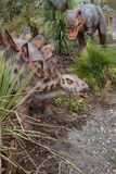 Allosaurus and Stegosaurus Royalty Free Stock Images