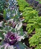 Allotissement, lignes des légumes. Images stock