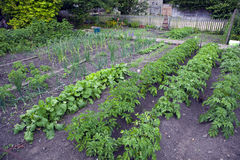 The Allotment Royalty Free Stock Images