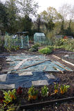 Allotment in Autumn Stock Images