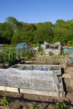 Allotment beds in Summer Stock Photos