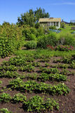 Allotment garden Royalty Free Stock Photo
