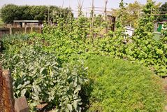 Allotment garden Royalty Free Stock Image
