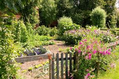 Allotment garden Royalty Free Stock Images