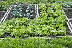 Allotment Garden Bed Stock Images