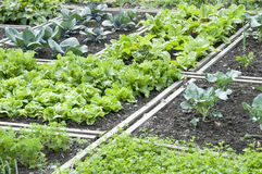 Allotment Garden Bed Stock Photos