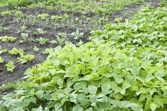 Allotment Garden Bed stock photo