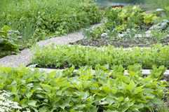 Allotment Garden Bed Royalty Free Stock Image