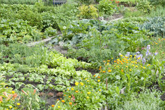 Allotment Garden Bed Royalty Free Stock Photos