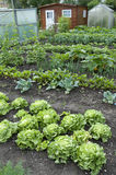 Allotment Garden Bed Stock Photo