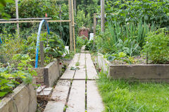 Allotment garden path Royalty Free Stock Images