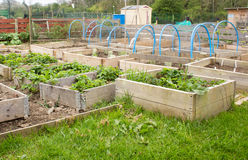 Allotment garden Royalty Free Stock Photography