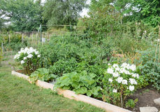 Allotment Gardens Stock Photography