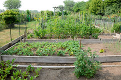 Allotment Gardens Royalty Free Stock Photos