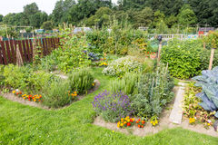 Allotment gardens Royalty Free Stock Images