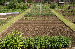 Allotment plot Stock Image