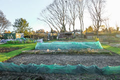 Allotment plot with trees in the background.  Taken in the autum Stock Image