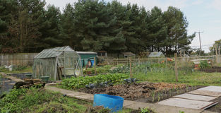 The Allotment. Stock Image