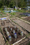 Allotment in Spring Stock Photography