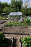 Allotment in Spring. Allotment beds and greenhouse in Spring stock photos