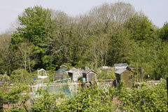 Allotment in Spring. Allotment plots and sheds in Spring stock photo
