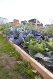 Allotment in summer Royalty Free Stock Images