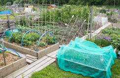 Allotment vegetable garden Royalty Free Stock Photography