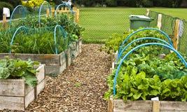 Allotment vegetables royalty free stock photos