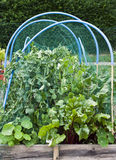 Allotment vegetables Royalty Free Stock Photography