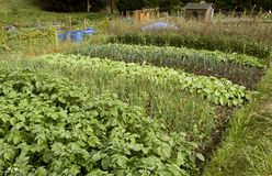 Allotments - 2. Allotments in the East of England, UK royalty free stock photos