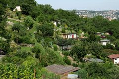 Allotments Royalty Free Stock Photo