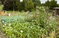 Allotments - 3. Allotments in the East of England, UK royalty free stock image