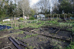 Allotments in Autumn Royalty Free Stock Image