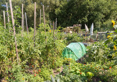Allotments Stock Images