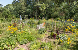 Allotments Royalty Free Stock Images