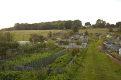Allotments Stock Photo