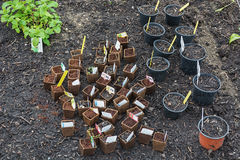 Allotments with seedlings pots in a greenhouse Stock Images