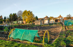 Allotments, shows a plot and lot so of sheds. Stock Photography