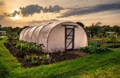 Allotments at sunset - Plastic Greenhouse Stock Images